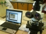 14.04.2010 Bio-Projekt 6. und 7. Jahrgangsstufe Leben im Wassertropfen