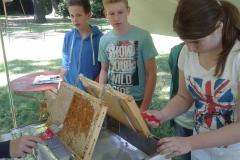 Ein Honigbienenbesuch (6. Klasse)